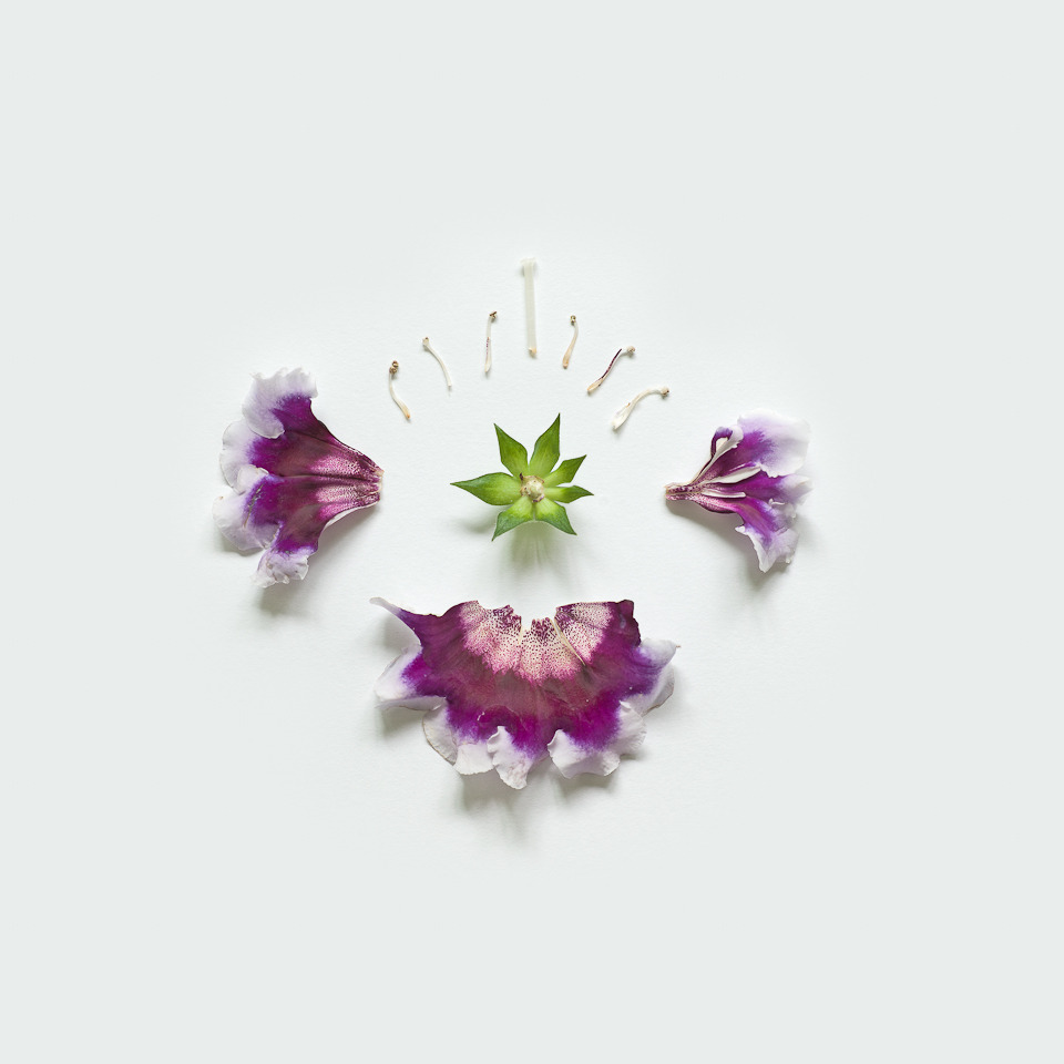 myampgoesto11:  Exploded flowers by Fong Qi Wei