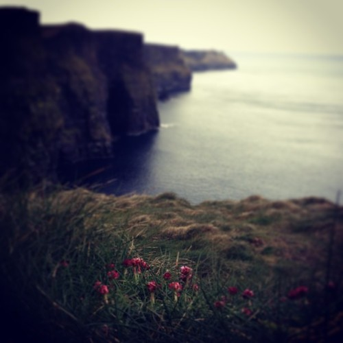 Clover at the Cliffs of Mohar (at Cliffs of Moher)