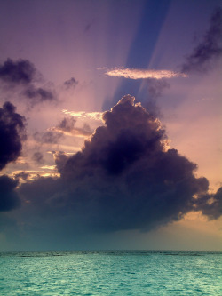 periderm:  Vakarufalhi, Maldives, Indian Ocean (by jogorman)