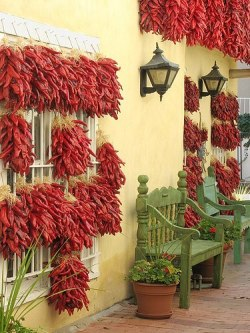 Drying chillies, Old Town, Albuquerque, New Mexico