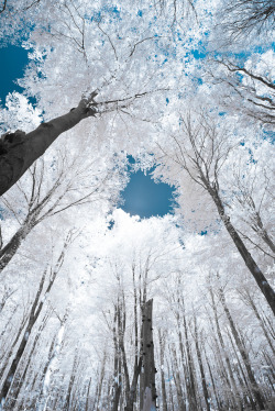 photography landscape featured photographers nature forest minuty