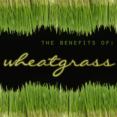 The Benefits of Wheatgrass? There are plenty! Drink in all the info you need on this impressive superfood!