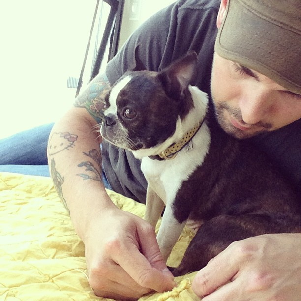 Sewing with the baby girl in his arms #bostonterrier #boston #squishyfacecrew #buhi @wbetterton