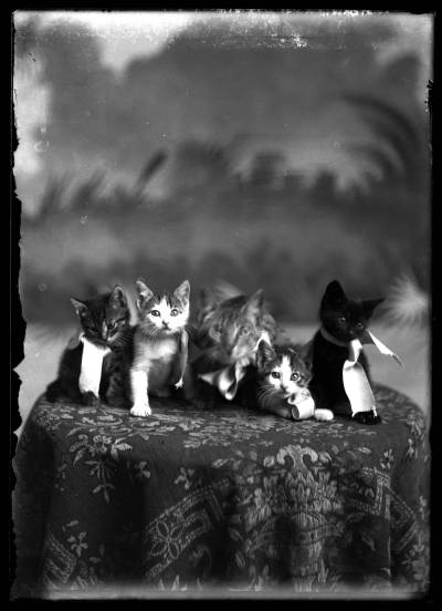 oldtimeycats:  Studio portrait of five kittens on a pedestal, probably taken in Compton's Photo Studio in Brigham City, Utah. Between 1895 and 1925. Source: Utah State University, Merrill-Cazier Library, Special Collections and Archives, via Mountain West Digital Library.