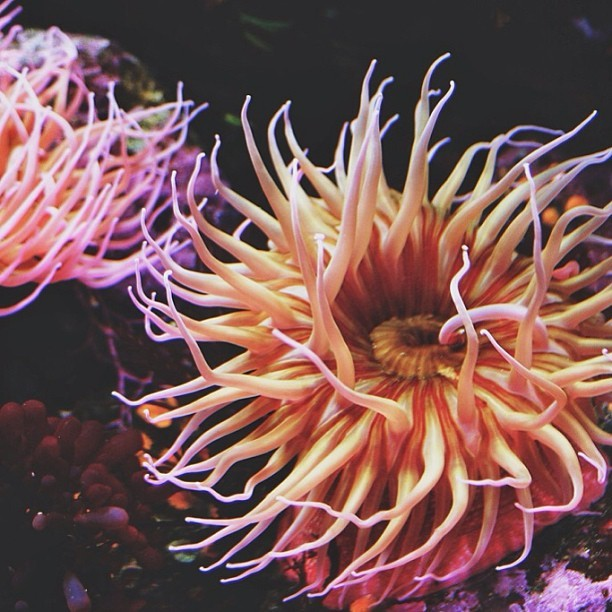 natureconservancy:  With friends like these, who needs anemones.