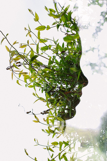 Face in the Bush by acearchie on Flickr.