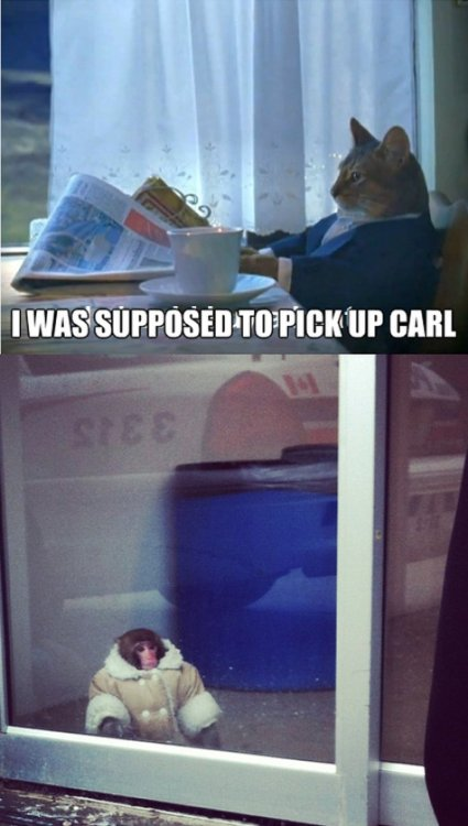 Cat Forgets to Pick Up Monkey in Winter Coat from Ikea  Poor Carl is at the end of his tiny little rope.