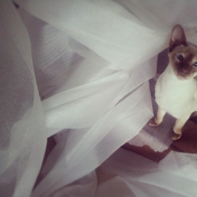 #siamese #cat helps unwrapping #artworks coming from the latest #exhibition  (hier: Osterby)