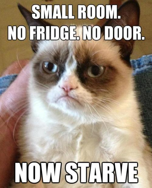 Reblog  if you can relate to Grumpy Cat's Simming habits sometimes.