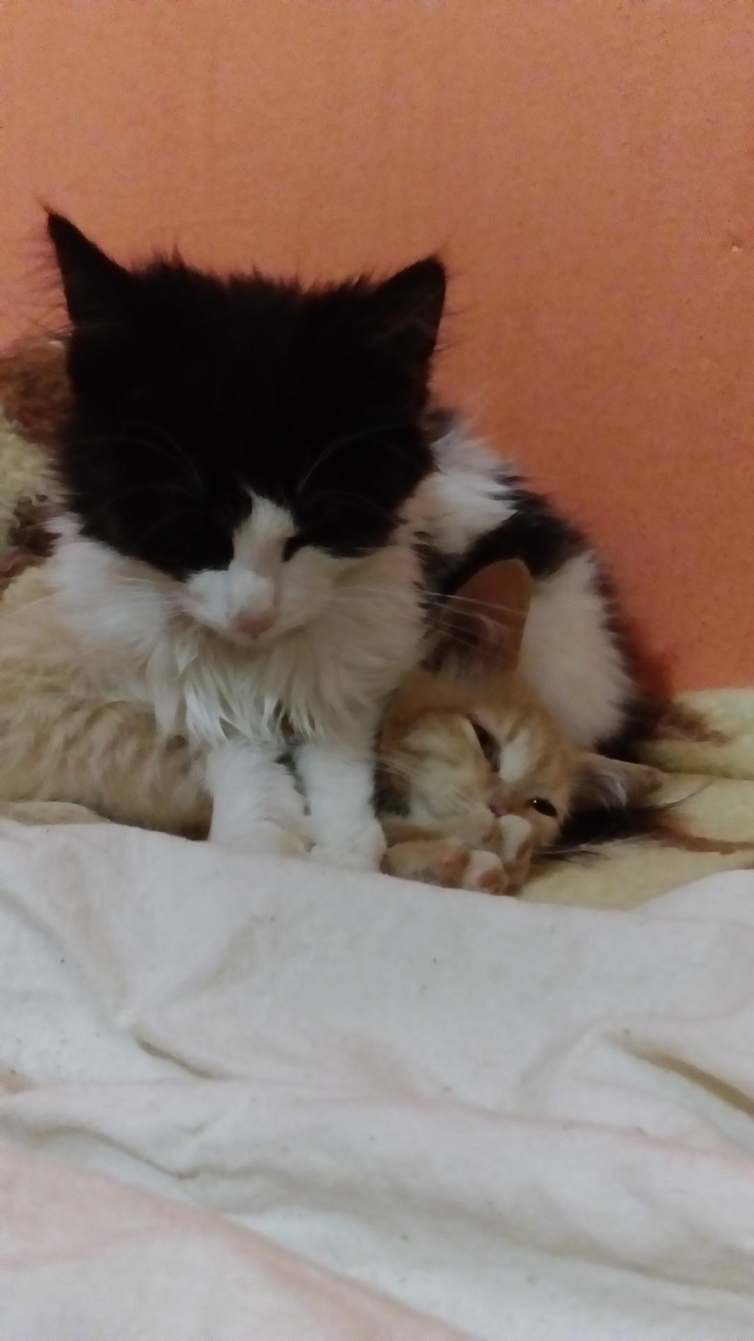 cats 8 bit