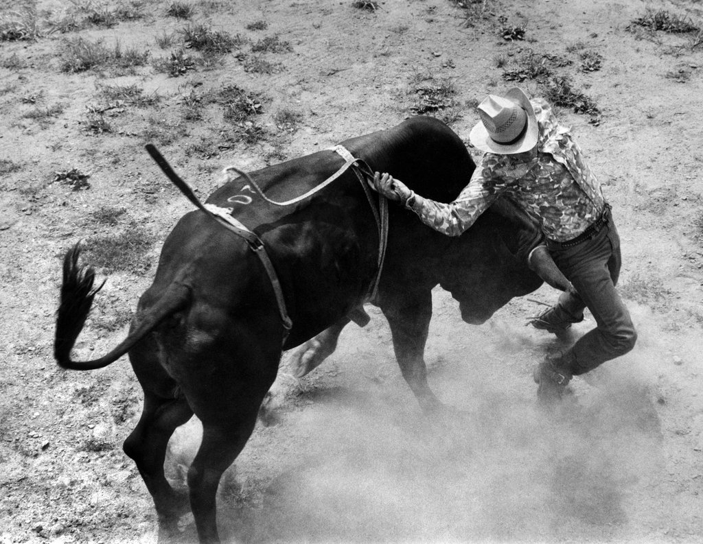 July 27, 1970: Jack Sogen was nudged by a bull that had just thrown him. Some 3,000 underprivileged children attended a rodeo at Weissglass Stadium on Staten Island, a preview performance for the championship at Madison Square Garden. Photo: Barton Silverman/The New York Times