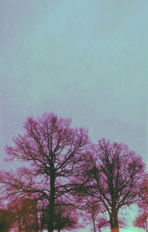 south-england:  Ooo Pink Trees ~ Thomas Hanks
