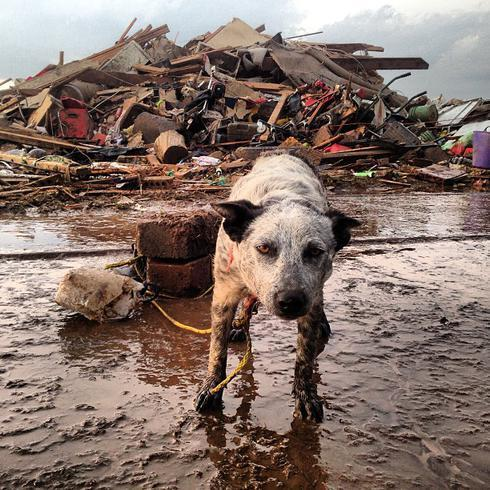 This dog survived with its owners in a storm shelter during the Moore, OK tornado. (twitter.com/MikeJenkinsTV)