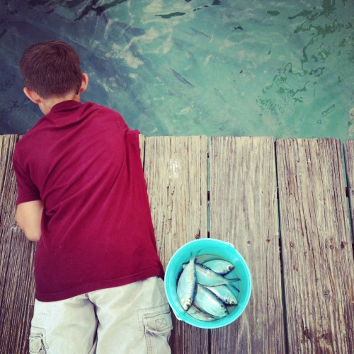 Feeding tarpons in Islamorada, Florida.