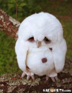 Sad Pets: The World's Saddest Owl
