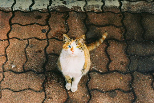 unterihremkissen:  4481FUJI10089524 by agnesloveurope on Flickr.