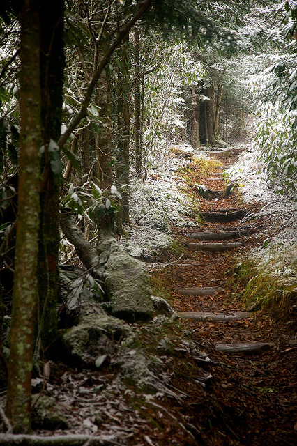 springdy:  Snowy, Smokey Mountains Trail by TheZmanAbides on Flickr.
