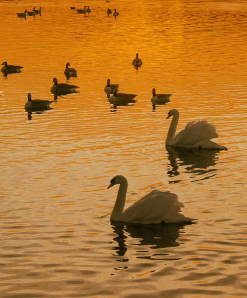 vurtual:  On golden pond (by David Dai)