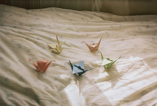 joanne-montgomery:  origami cranes by labunakti on Flickr.