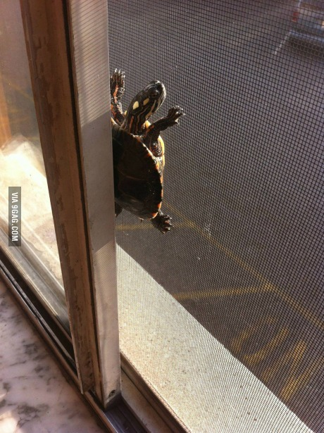 9gag:  My idiot turtle got stuck trying to escape.