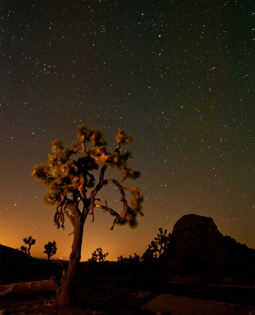 Summer nights in Joshua Tree look a lot like this. In other words, beautiful.Photo: Sarah Chah