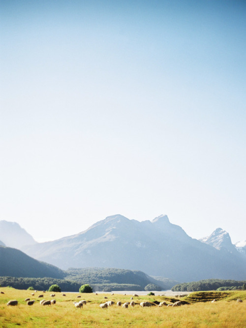 travellogue:  New Zealand by Lani Elias