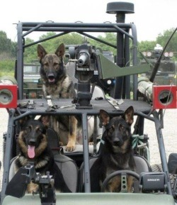 dog dogs military navy seals german shepherd SEALS German Shepherds military working dog mwd M2 Browning dpv Desert Patrol Vehicle Military Working Dogs Chenowth Ma Deuce