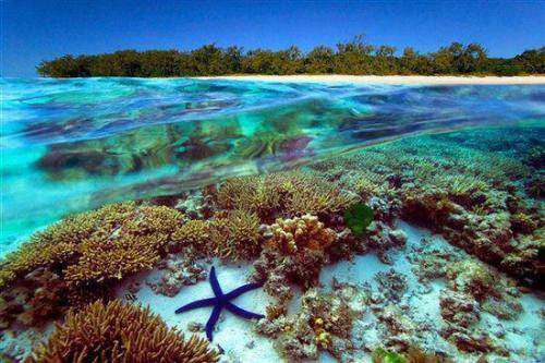 cindyburkeoriginals:  Great Barrier Reef, Australia  I want to go there so BAD…..