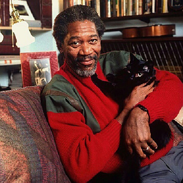 wecameasshepherds:  He likes cats too. #morganfreeman #cat