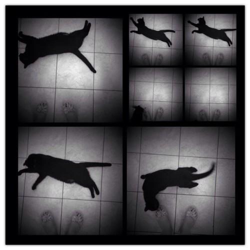 #ourcatnora #animals #blackcat #cat #catstagram #domenica #instacat #petstagram