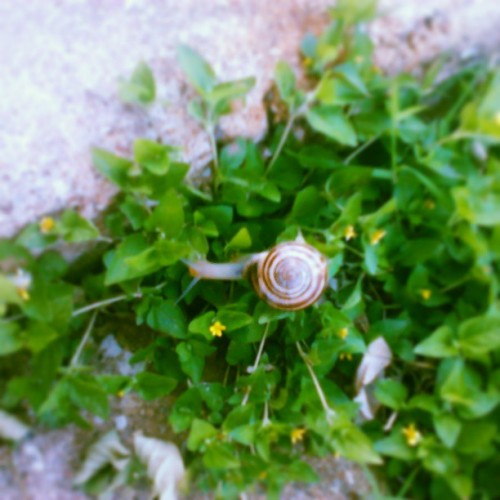 They're EVERYWHERE. #snails. #MeNoGusta.