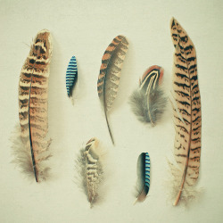 The Feather Collection by _cassia_ http://flic.kr/p/ehYfjR