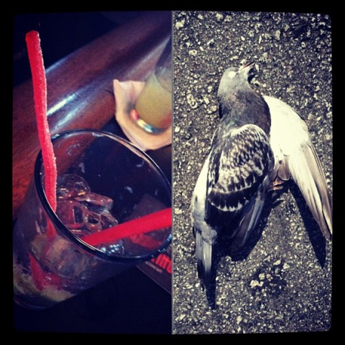 My straw is better than your straw. My dead pigeon is better than your dead pigeon- it moves…