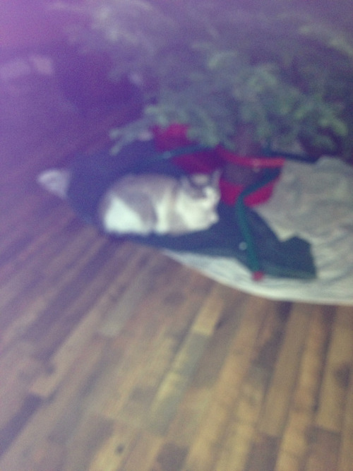 Our cat, Frankie Sue's christmas tree.