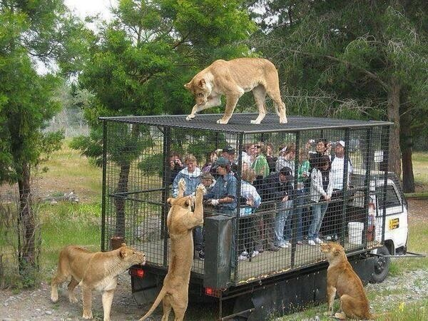 CORRECT way to view wild animals