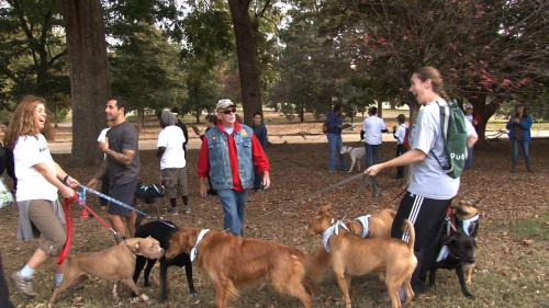 Lots of responsible dog care takers marched in Atlanta's First Bully Breed March held in Oct. 2012! Look for Stubby's Heroes on FB and check out our website for more events and photos! http://stubbysheroes.com/