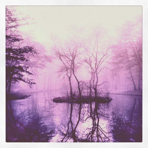 #fog #nature #trees #island #lake #water #mystery #beautiful #scenery #bestoftheday #webstagram #contestgram #popular #popularphoto #picoftheday #photooftheday #love #instafun #instahub #instagood #instalike #instalove #iphonesia #instafollow #iphoneology #instagramhub #iphoneography