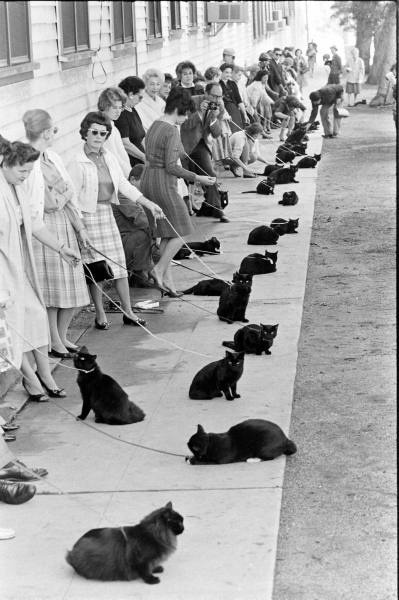 osrammarso:  domeafavorand-die:  awmygosh:  Cat audition for Sabrina the Teenage Witch for the role of Salem  omfg  guys dont you realize its a picture from the 50s