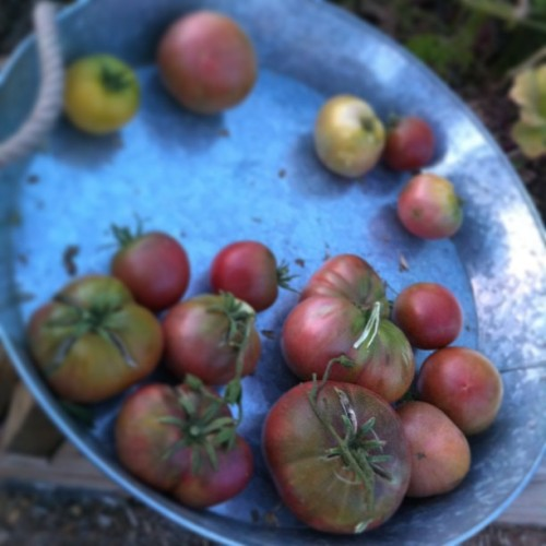 Nothing like heirloom tomatoes.