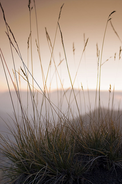 followthewestwind:  Sunrise across grass by Julien Ratel ( Júllí Jónsson ) on Flickr.