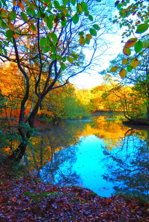 fuckitandmovetobritain:  Epping Forest
