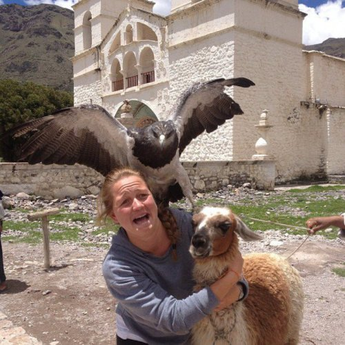 Falcon Ruins Picture with Llama  Killed by photobomb.