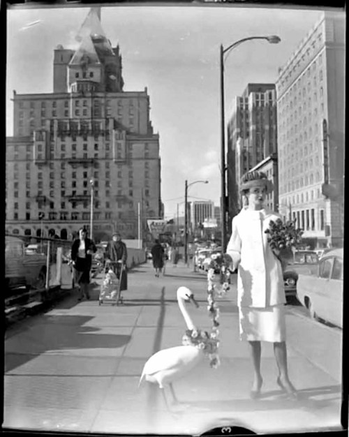 pasttensevancouver:  Woman and swan, 1950s Source: Vancouver Public Library #41035  Vancouver then/now: On the left, what appears to be a parking lot in front of the old courthouse (that has since become the Vancouver Art Gallery) is now home to a fountain plaza that's hosted many a 4/20 Day smoke-in, and, not too long ago, Occupy Vancouver.
