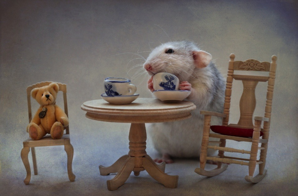 puppiesnkittens:  Another cup of tea http://bit.ly/XF1vU7