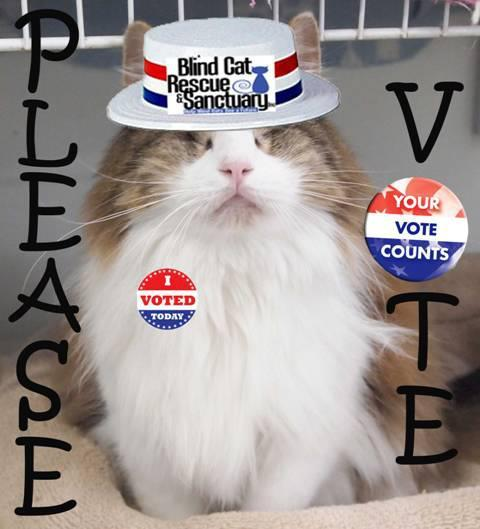 "Please take your time to vote for the Blind Cat sanctuary in NC to win a bunch of money to fund their sanctuary!!!! It only takes a minute. Go to this link and type ""blind cat"" into the shelter name box and choose the state NC. Vote!!!!! Also if you want to help a few GREAT causes, there is a button at the top of every causes page on greatergood.com, that you can click once a day to help fund each one! You can help fund diabetes, autism, hunger, rainforest, animal, literacy, veterans and breast cancer causes all with ONE CLICK once a day! The more people who click, the better too! So take the time to do it. What's 5 minutes out of your day, at the most? Click here!"
