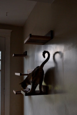 etsy find of the day 1 | 2.18.13handcrafted hardwood cat shelves, set of 5 by kittyoverlordsi can't get enough of the name of this shop — kittyoverlords. brilliant. i know my two guys would just LOVE to have shelves like these to climb on / rule from :)