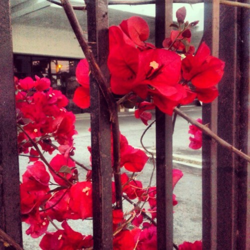 #LA #flowers #Californialove #peaceful