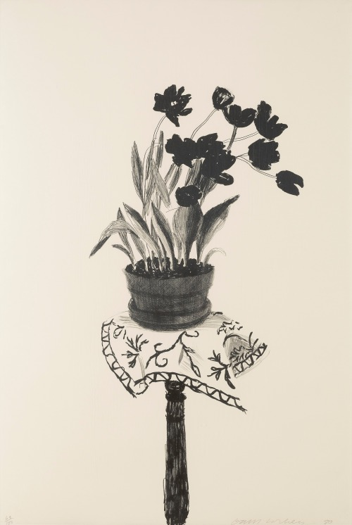 lasagnecrew:  David Hockney - Black Tulips