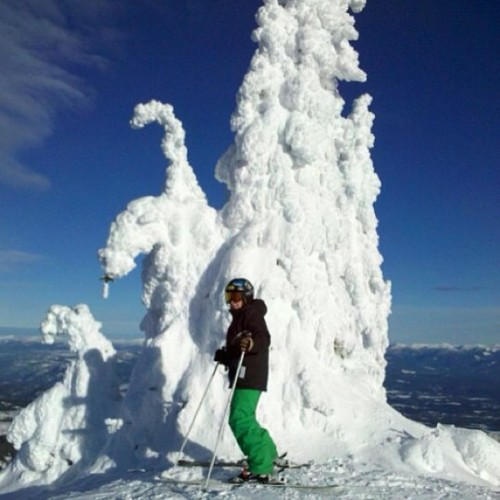 #Schweitzer #son #tree #snow #shred #love #nature #lucky #life