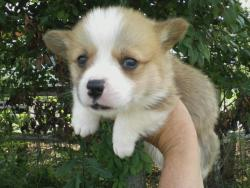 Bringing home this little guy one week from today! I can't WAIT!